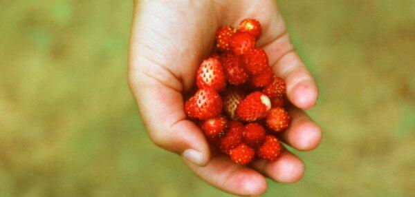 peotäis maasikaid