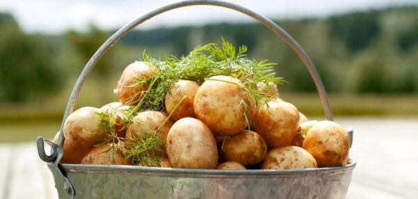 kogumispäevik, säästuretseptid kartulist