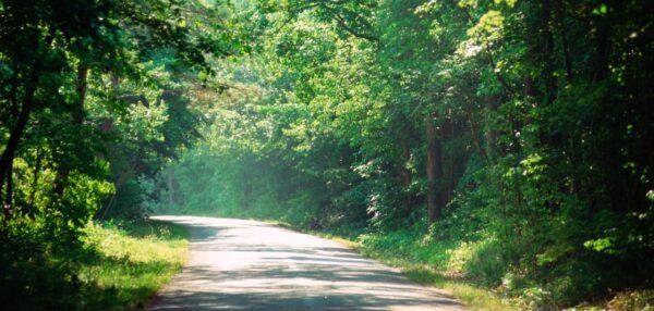 tulevikupangandus, tee viib läbi metsa